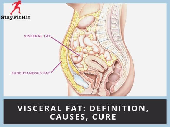 Visceral Fat :- Definition, Causes And Cure