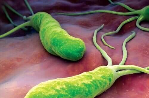 H.pylori bacteria